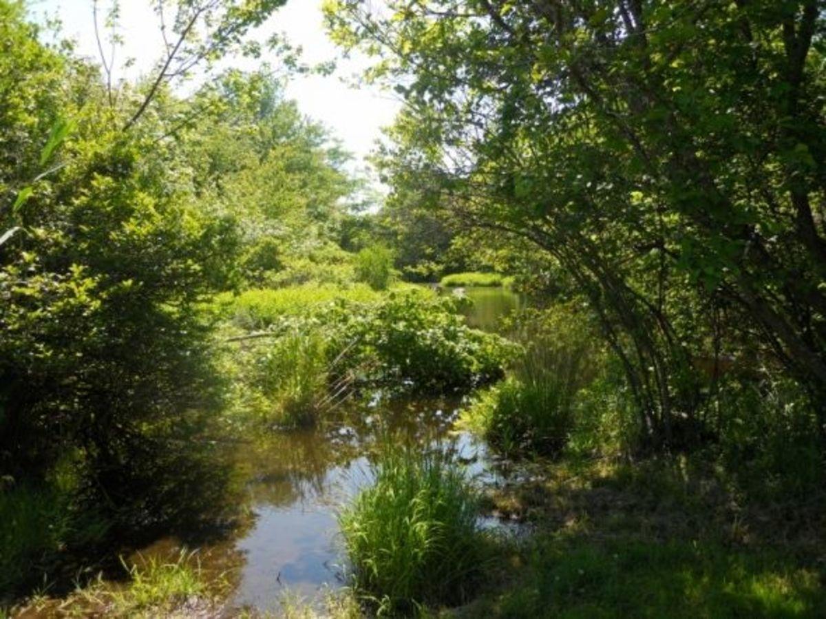 Goose-Pond-Haley-Farms