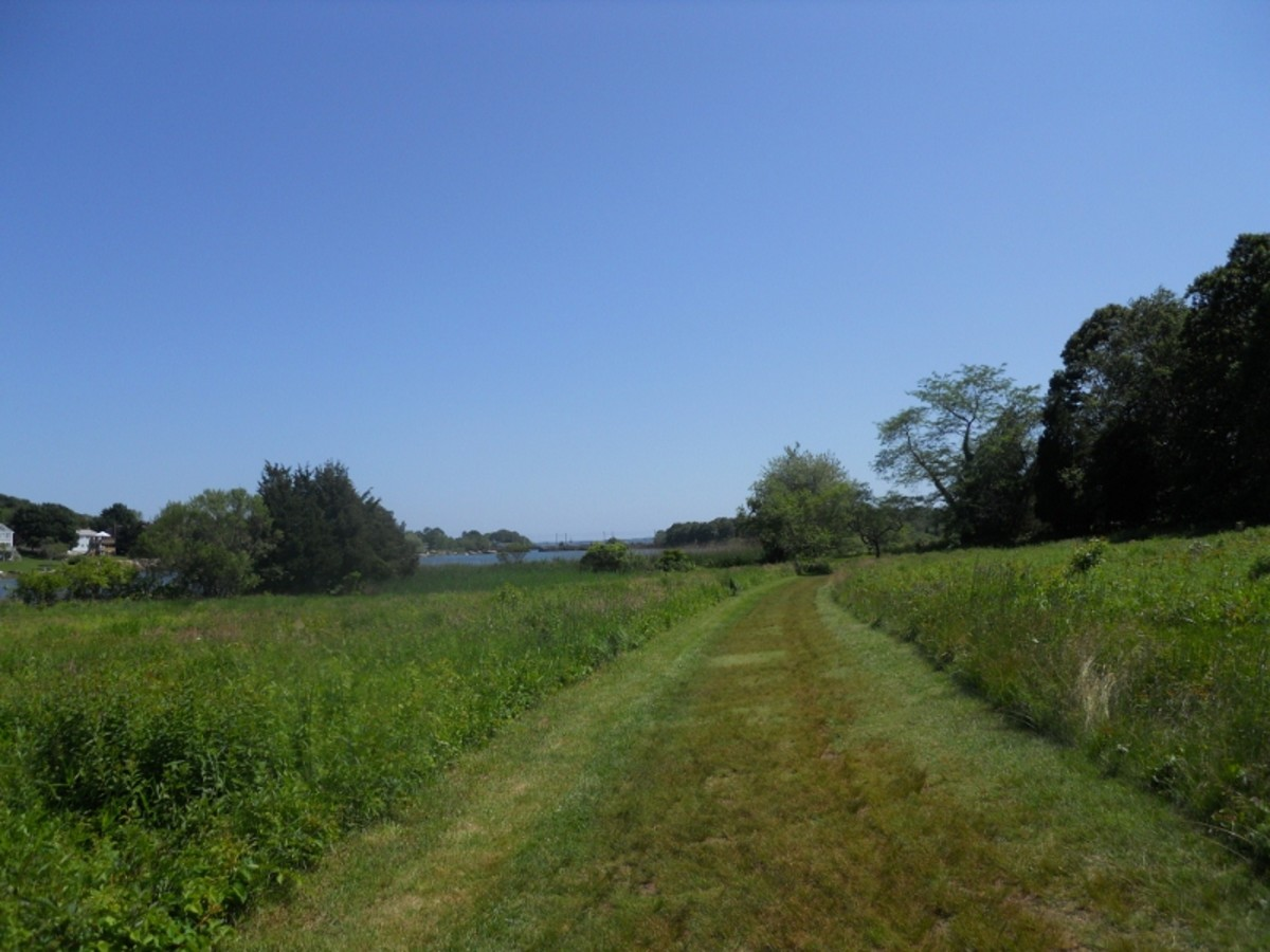 Mowed Hiking Path to Palmer Cover