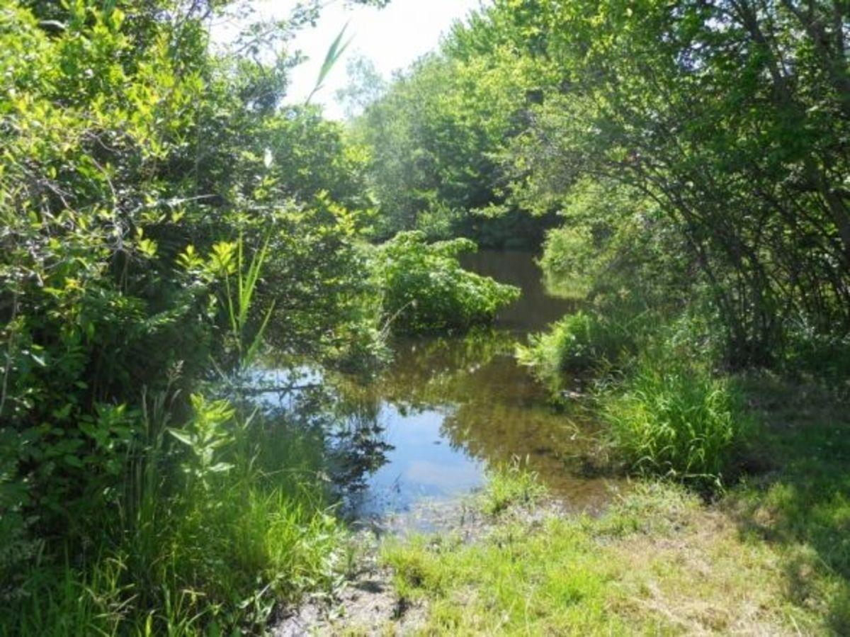 Goose Pond at Haley Farm State Park