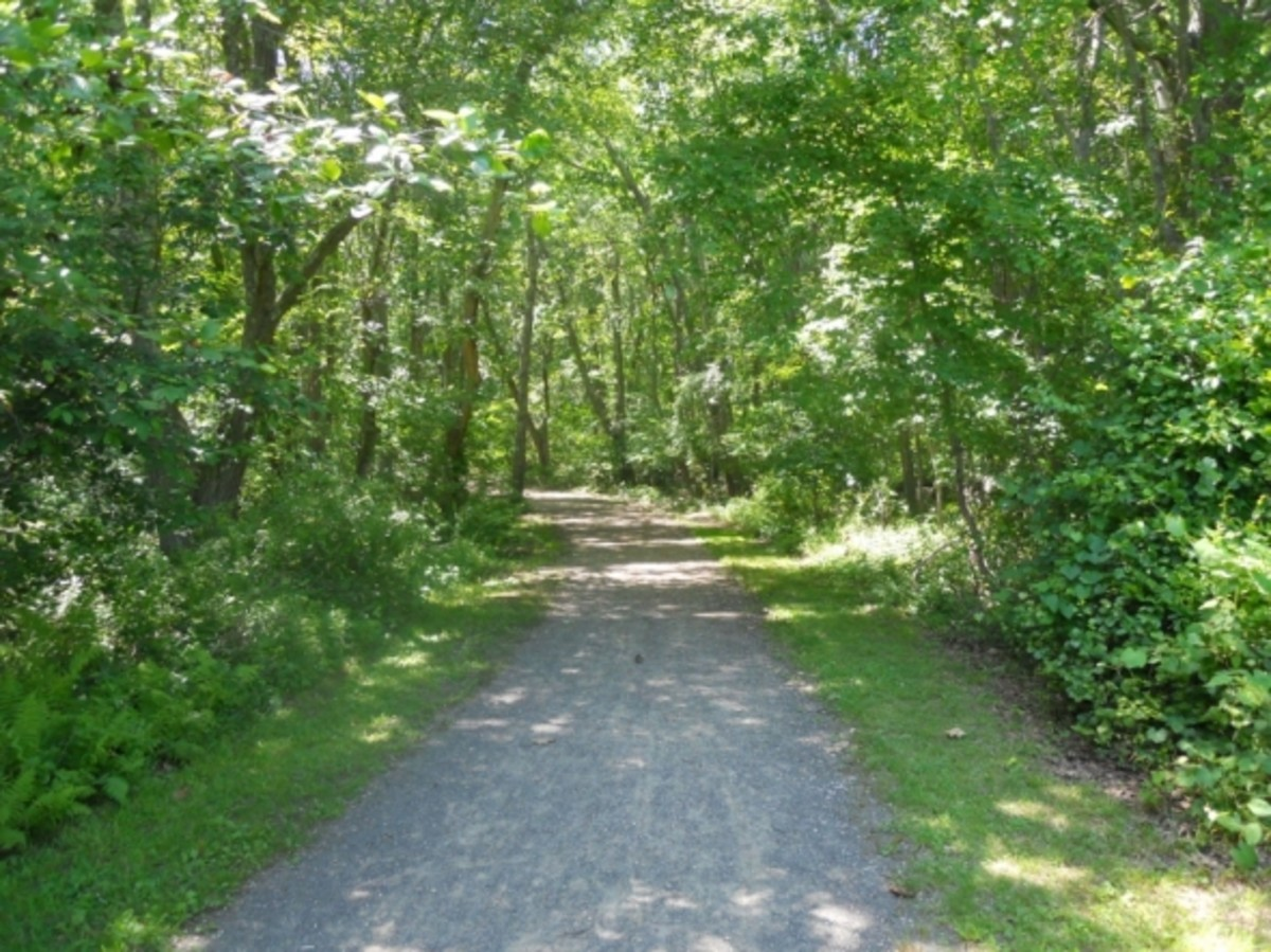 Parts of the bike path are shady and very cool.