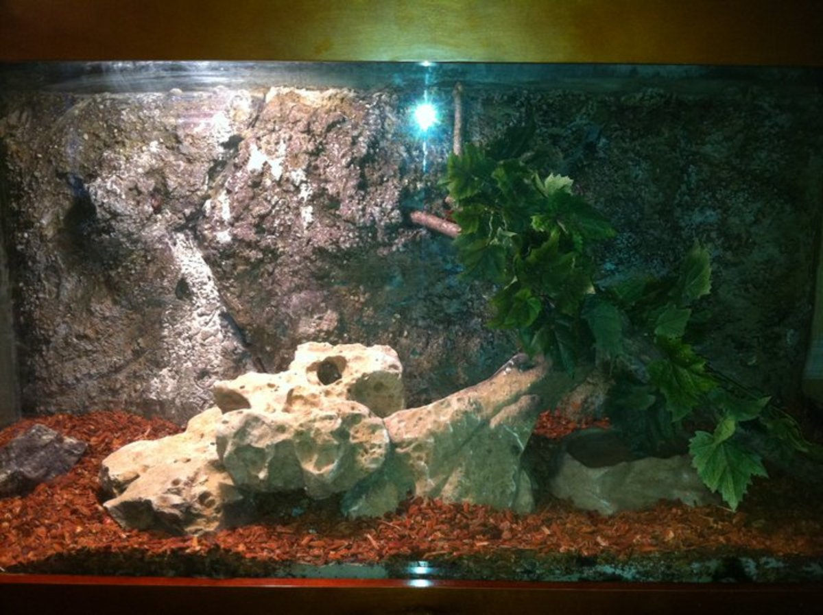 90 gallon snake tank with 3D background