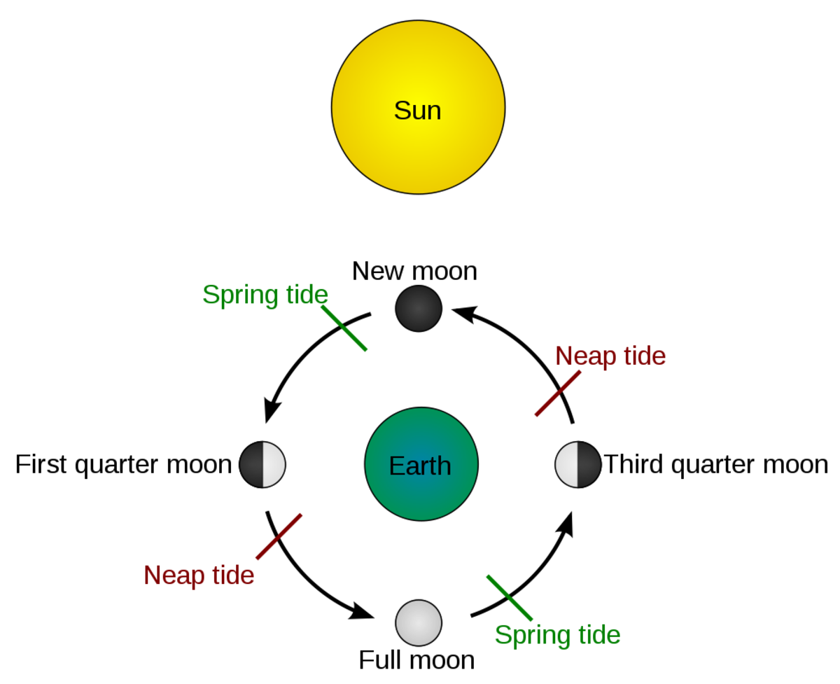 Tides schematic. Due to the bathymetry of some areas, neap and spring tides reach their maximum force 2 days after the first quarter moon, third quarter moon and new moon, full moon, respectively. In the absence of complications due to bathymetry, sp