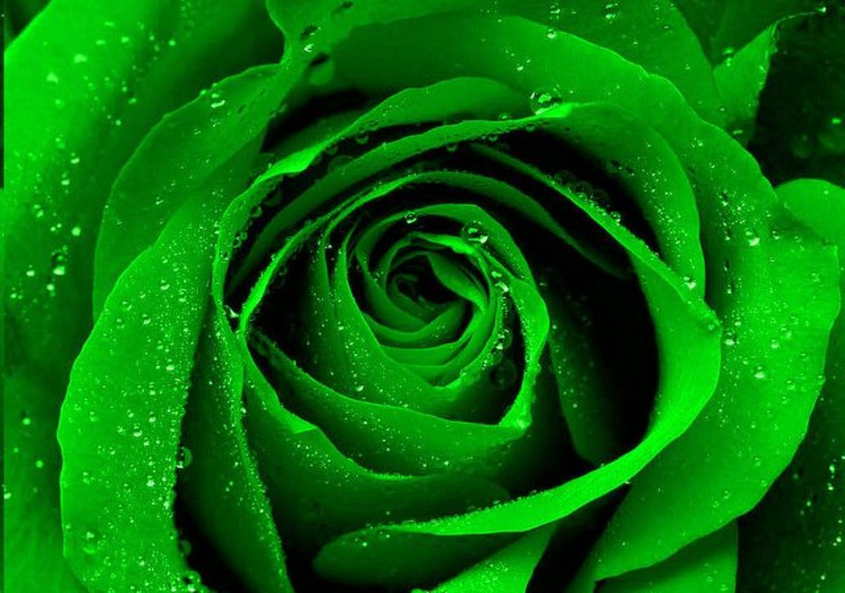 How to Make Green Roses: A Simple Step by Step Guide
