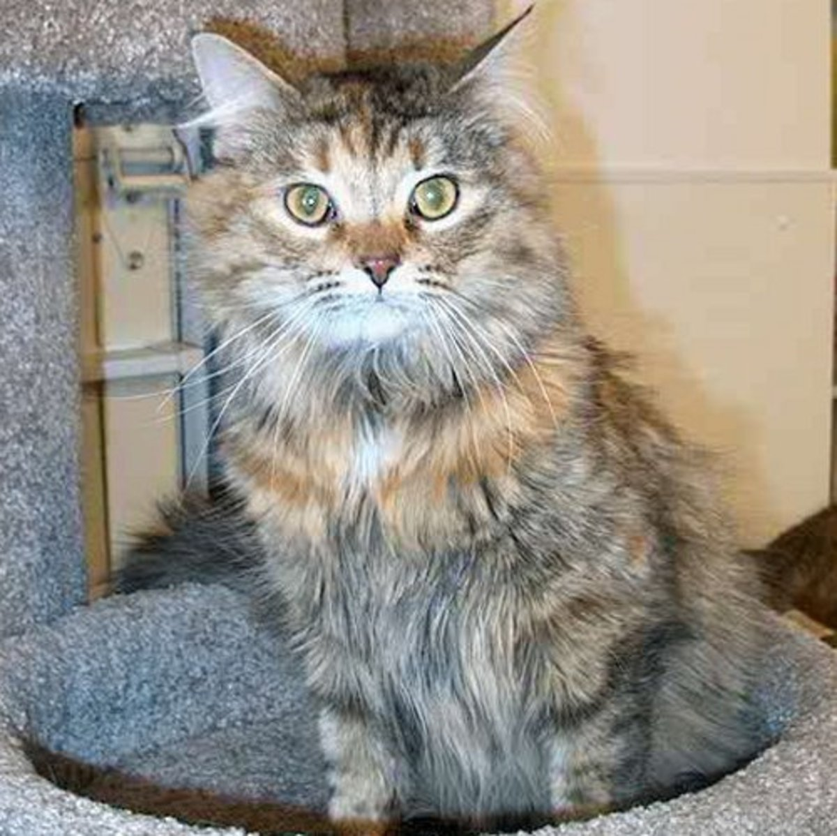 A Domestic Long Haired Cat