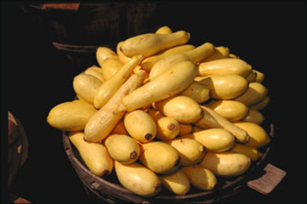hungarian-food-stuffed-squash-and-kohlrabi