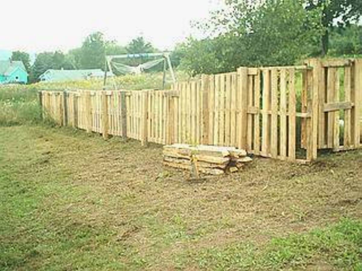 Here is a fence that's made out of free pallets.
