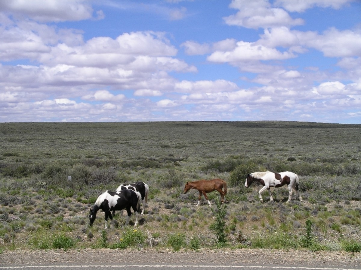 The grasslands of Argentina are called pampas