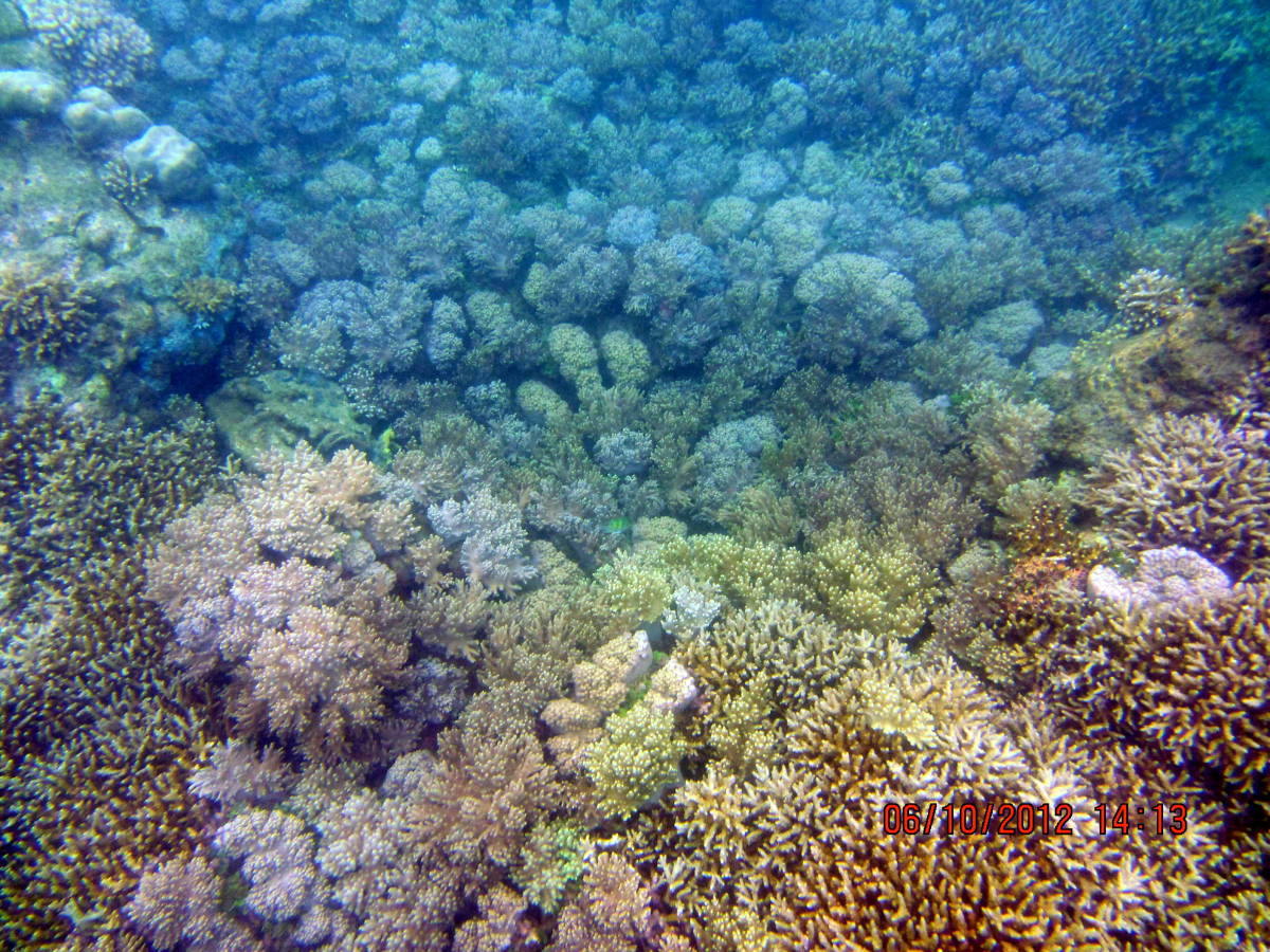 soft and hard corals at the Marine Sanctuary