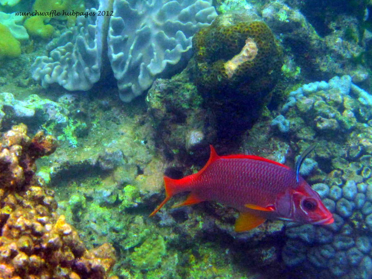 colorful fish at the Marine Sanctuary