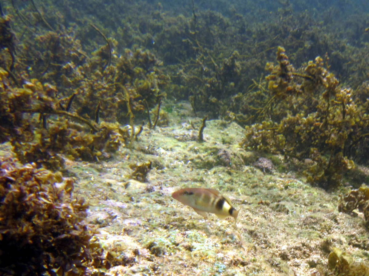 snorkeling at the Fish Sanctuary of Dos Hermanos Island - there were lots of different types of fish but also tall sea grass