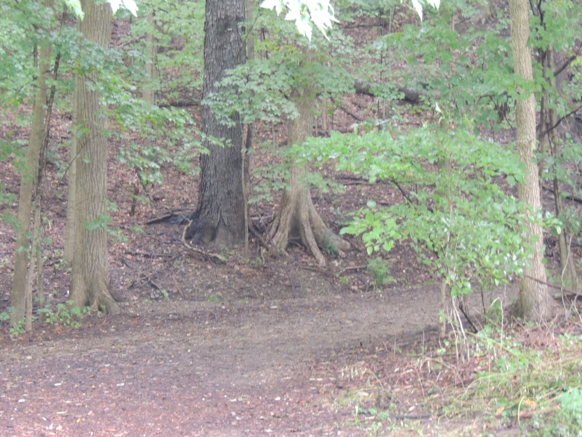 One of many hiking trails in the CVNP.