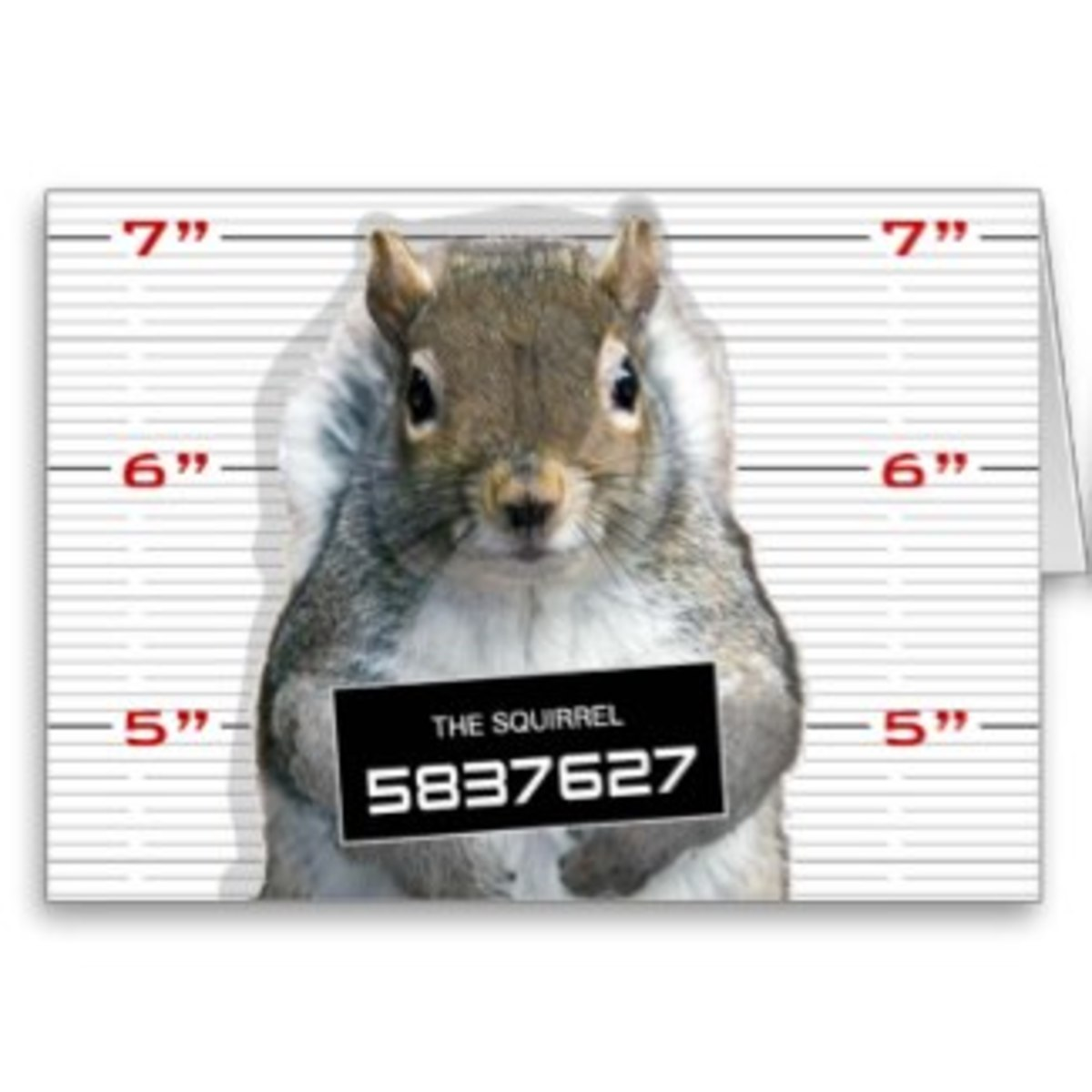 Oh, that naughty squirrel. My Florida neighbors had squirrels invade their attic. It cost them $4,000 to have someone come in to trap and remove the squirrels, clean up the debris, and block places where the squirrels had entered.