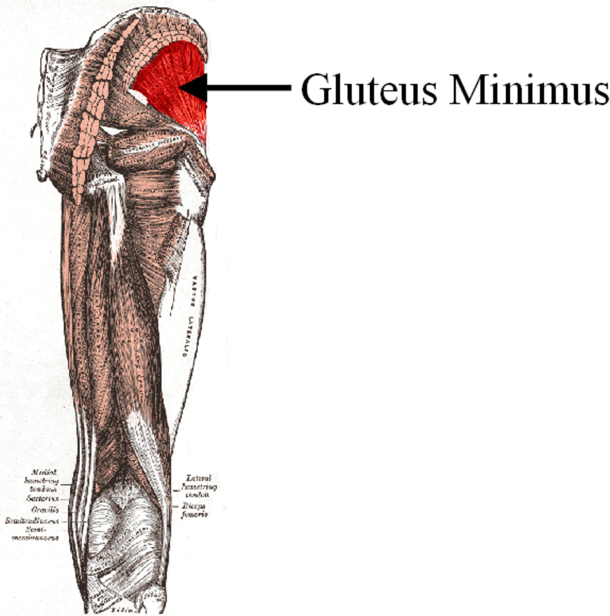 Video Collection of the Best Glute Exercises