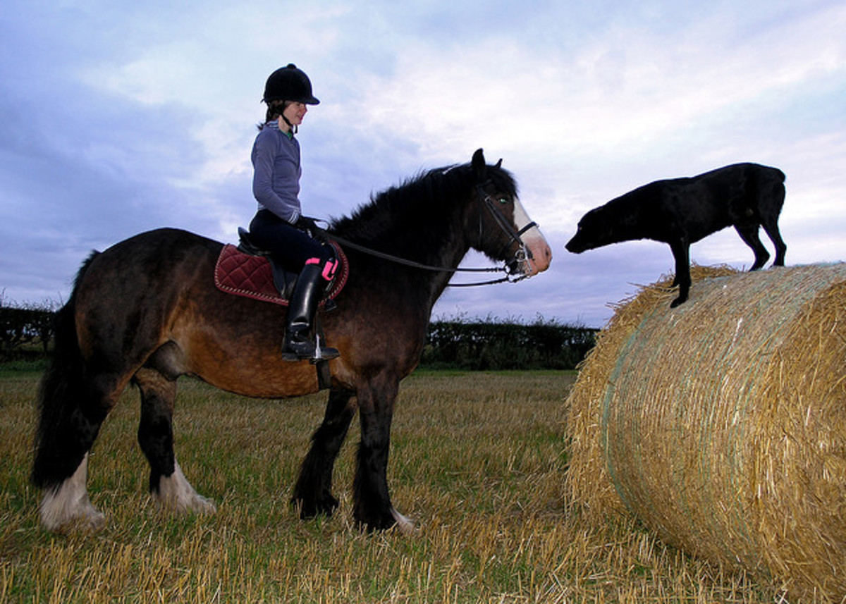 Dogs and horses may or may not get along famously--it all depends on the dog and the horse.