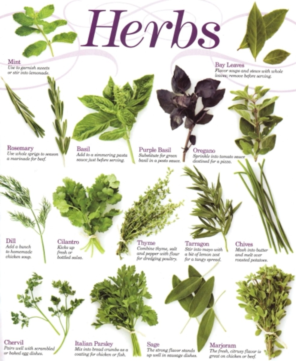 Which Herbs taste best with what foods?