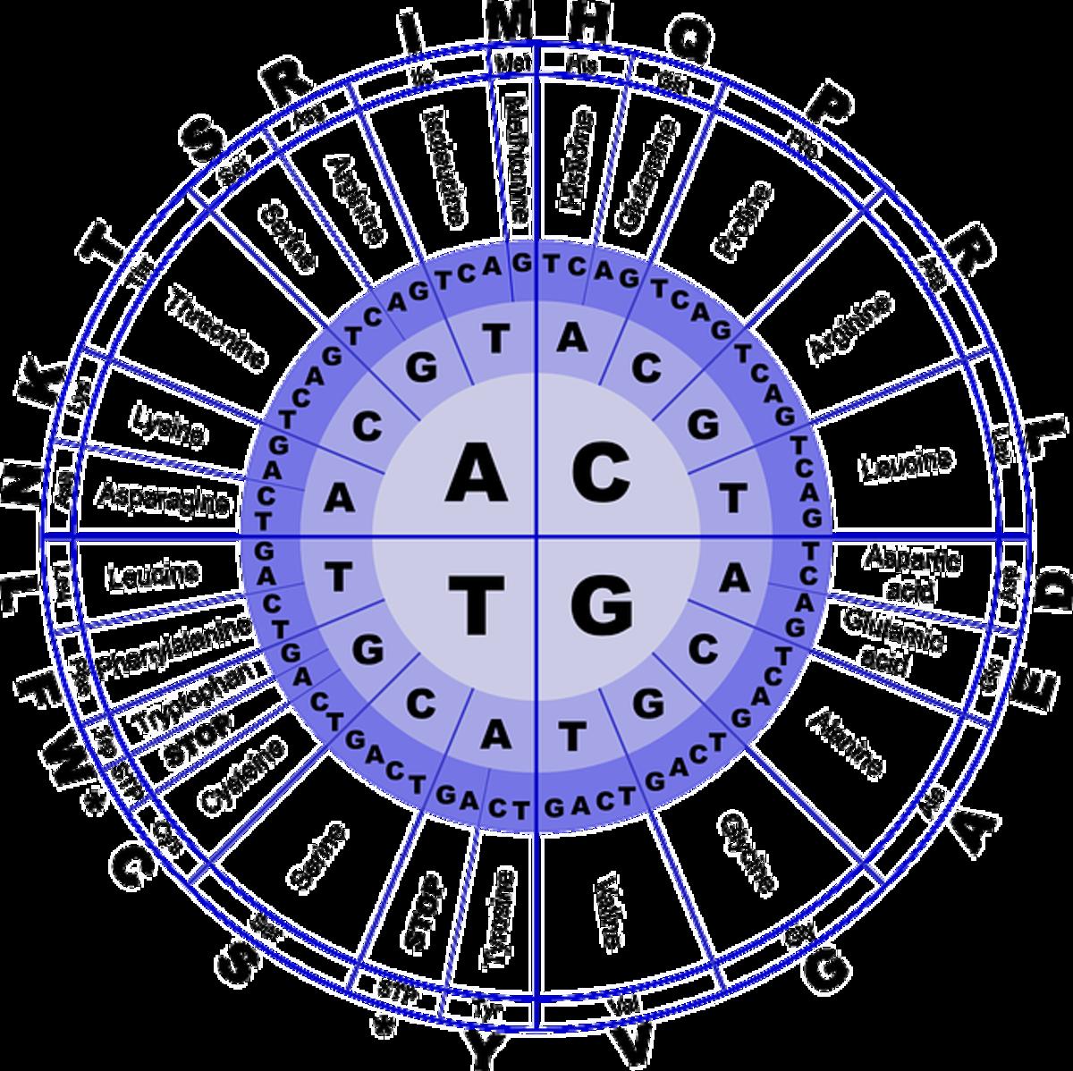 What are the Standard Twenty Amino Acids?