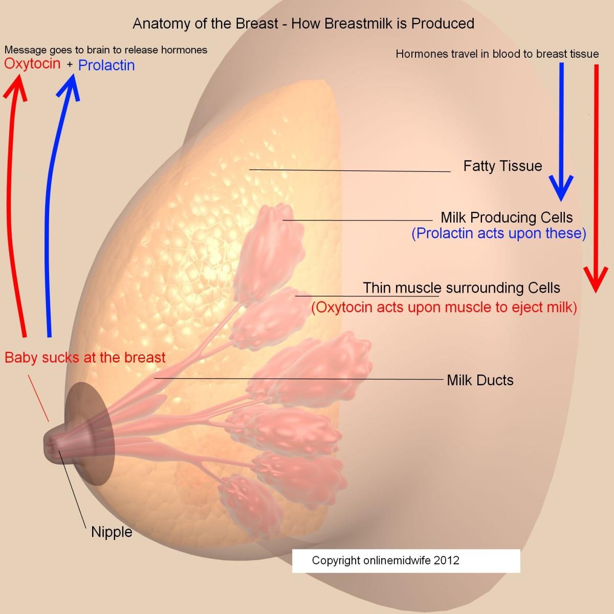 breast lump lactation