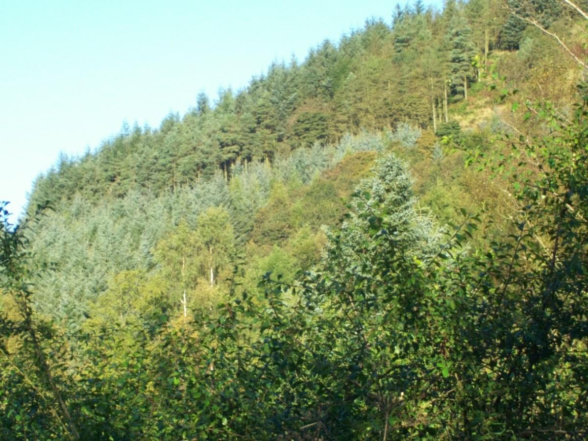 Harran Hill in Fife - a Walk Back in Time