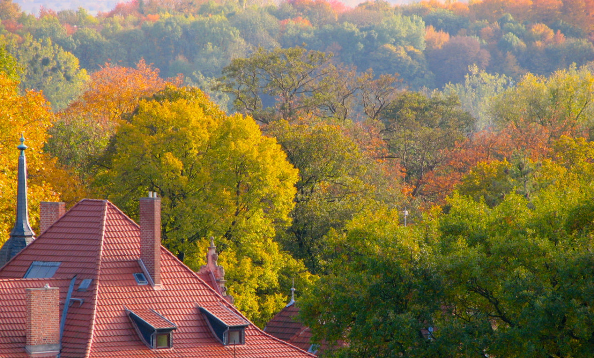 A rooftop in the World Heritage listed town of Quedlinburg, Germany, surrounded by autumn foliage.