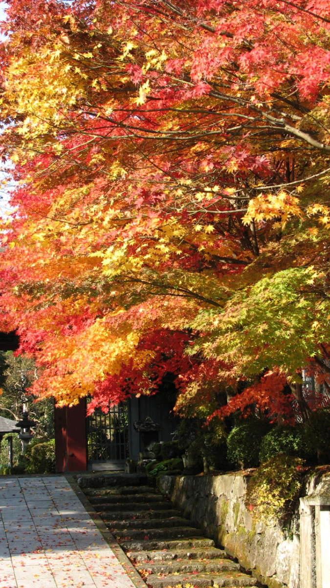 Fall foliage lining the path to a cemetery in Nikko, Japan.