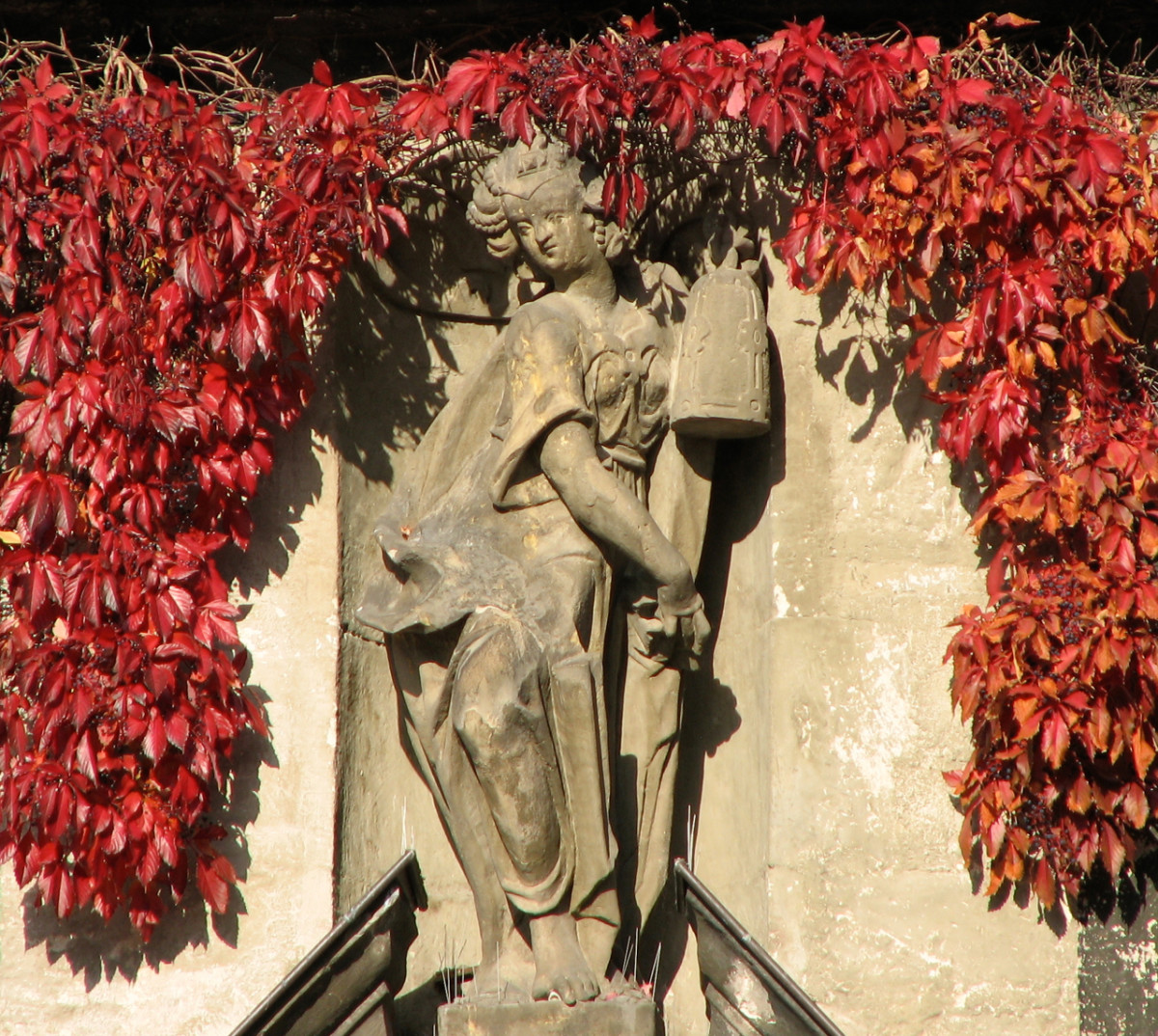 A beautiful red vine framing the statue on the old town hall in Quedlinburg, Germany.