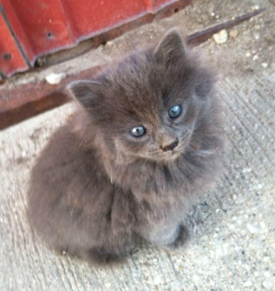 barn-kittens