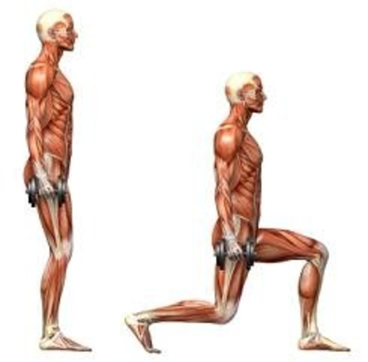 Mastering the  Lunge Exercise