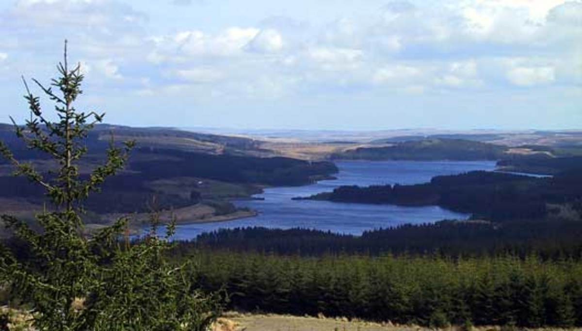 The long view: Kielder Water from the north, its shores bristling with forest - the scheme was to provide work experience, mainly for  ex-miners and shipworkers from Tyneside and around urban Northumberland