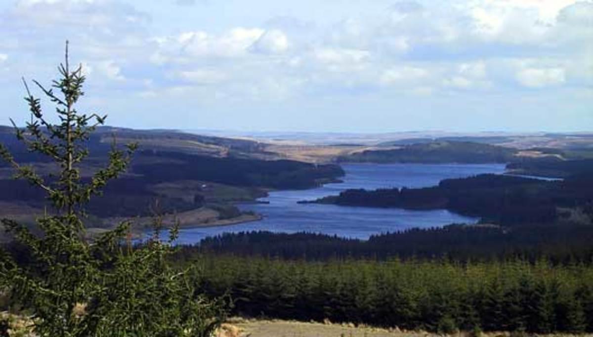 Travel North - 36: Kielder Wildlife Park, Woodland Wonderland in Northumberland