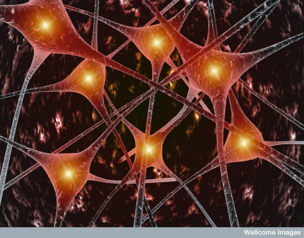 Motor Neurone Disease - Now contains new research into stem cell treatment.