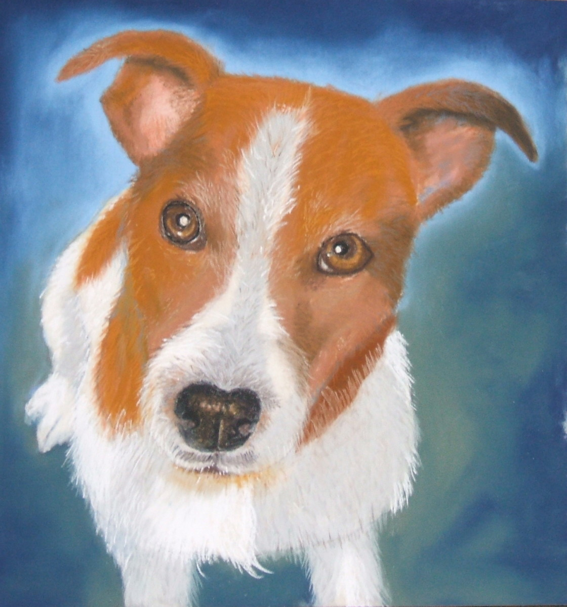 Archie the Jack Russell.  Pastel on paper