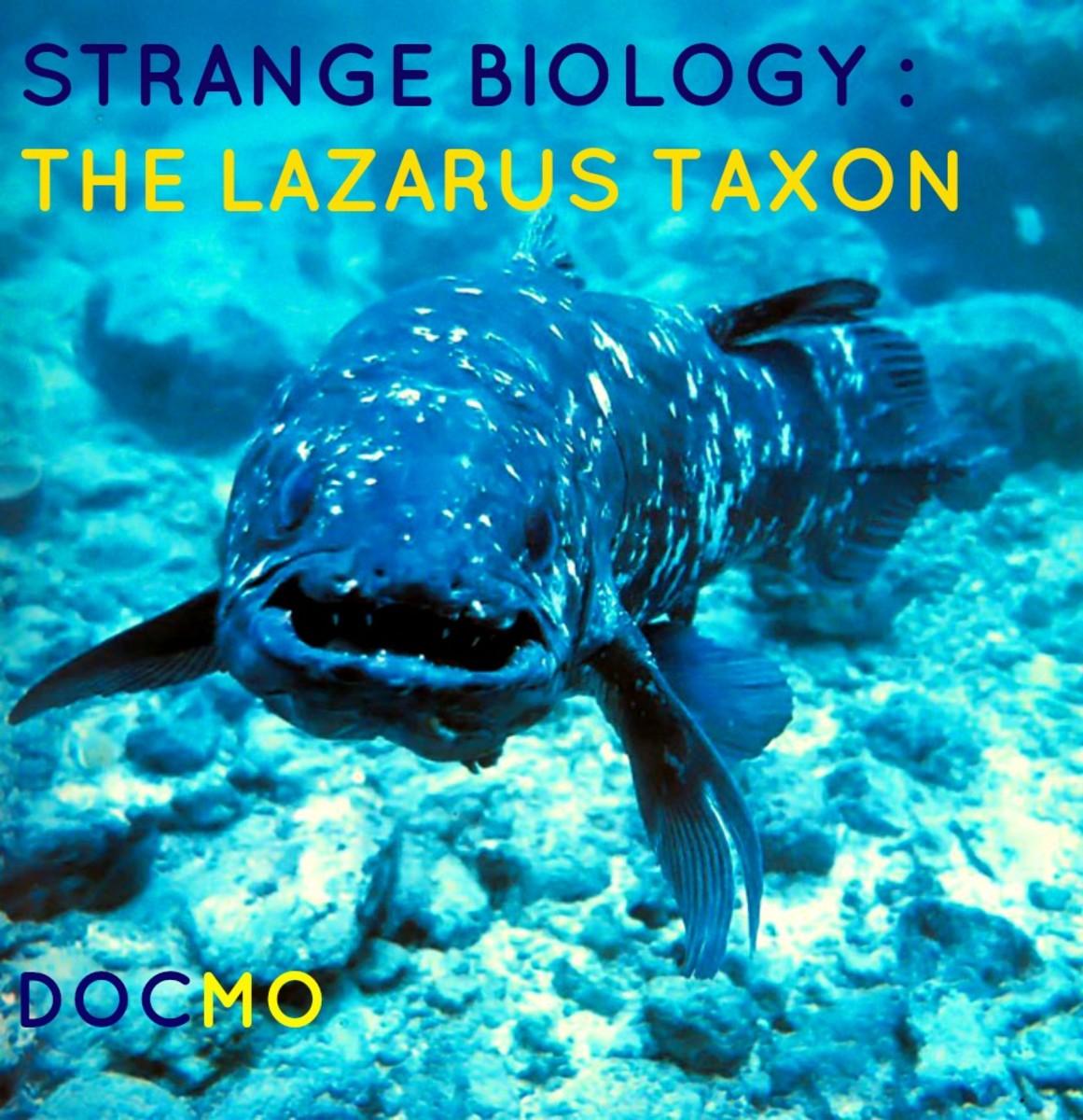 The Lazarus Taxon