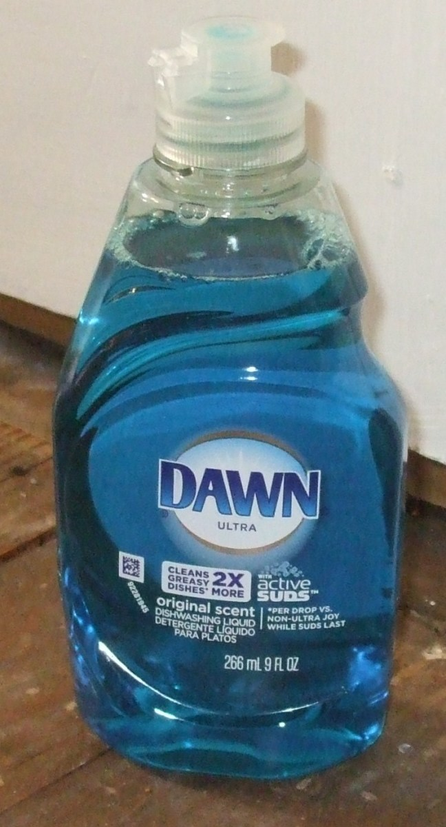 Bathing a Cat in Dawn Blue Detergent for Flea Treatment