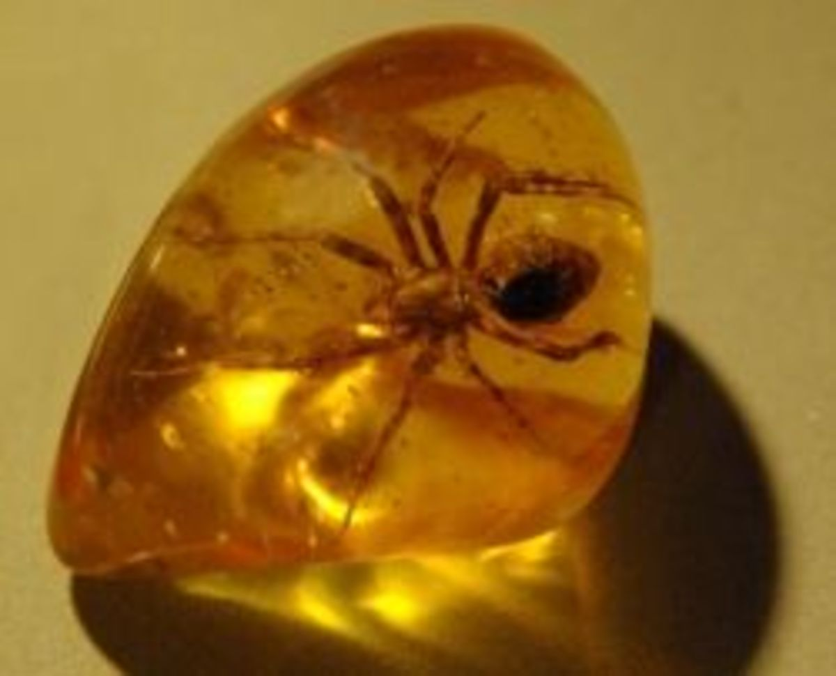 Amber with spider