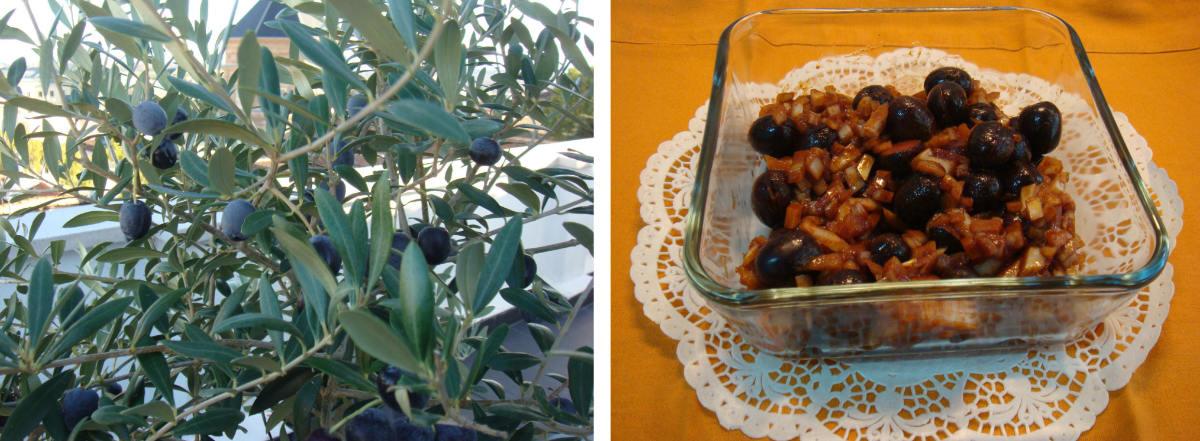 preparing-and-seasoning-home-grown-olives
