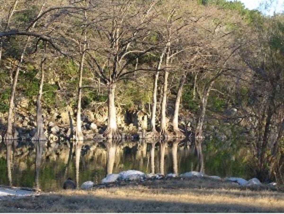 Guadalupe River by Camp Huaco Springs: Suggested Areas for Rainbow Trout Fishing