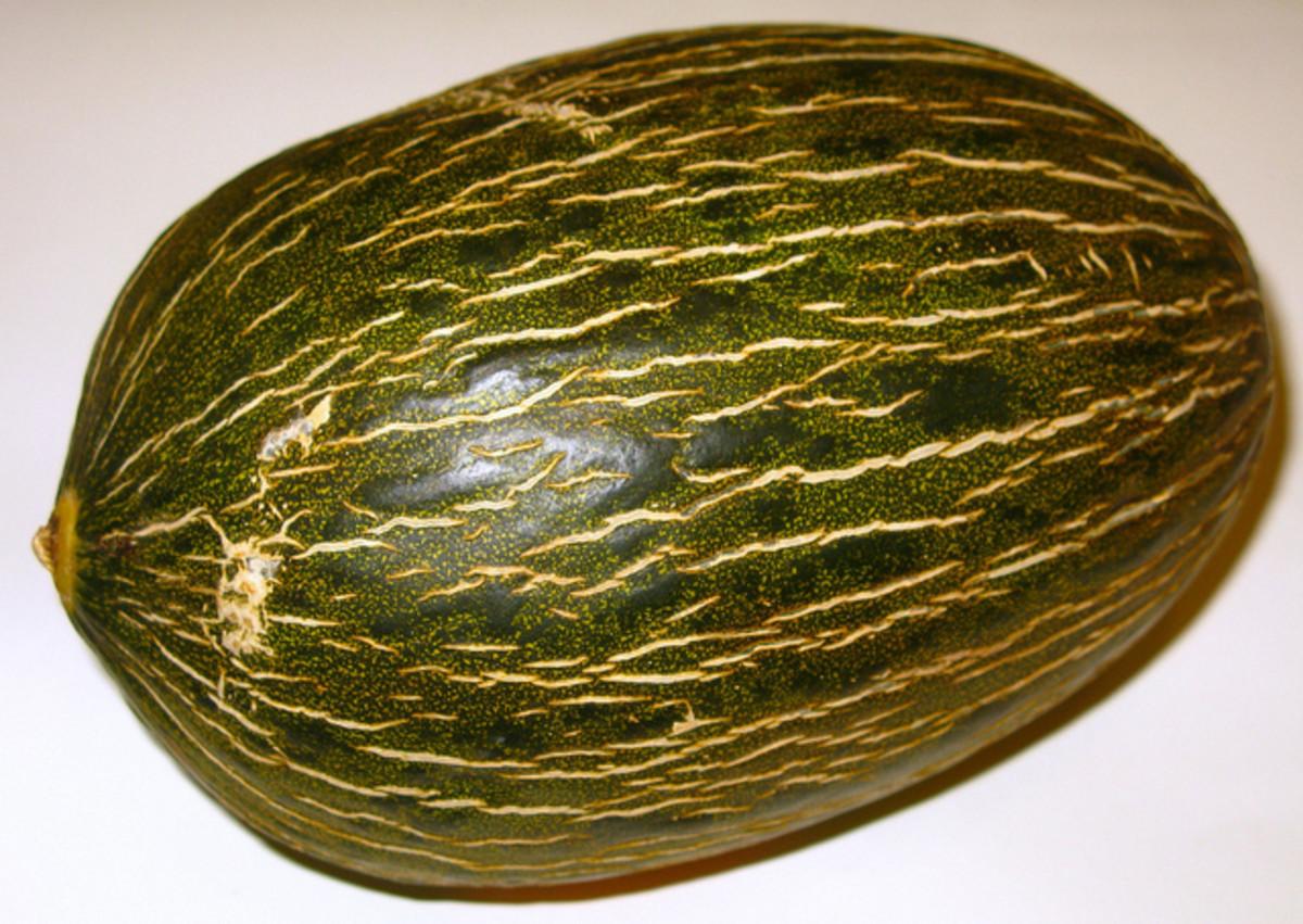 Piel de Sapo or Santa Claus Melon.