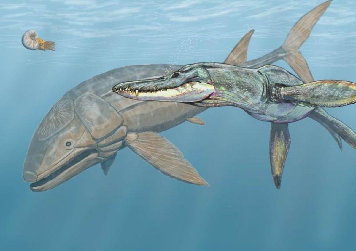 Liopleurodon, the biggest predator of all time harrassing the biggest fish of all time, Leedsichthys.