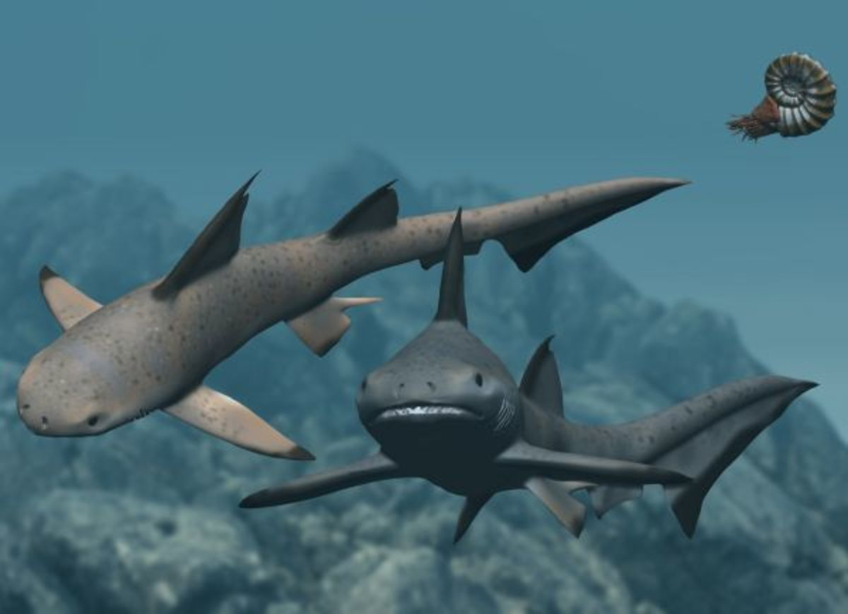 A restoration of Hybodus, a rather devilish looking shark.