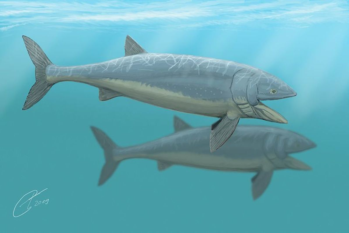 Leedsichthys was the biggest fish that's ever lived, comparable to a blue whale in size.