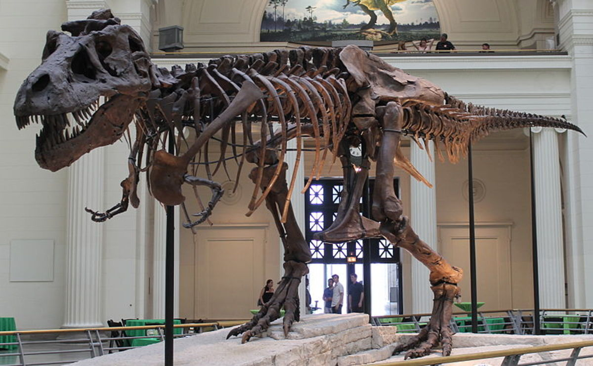 This is the famous 'Sue' skeleton on display in Chicago's Field Museum.