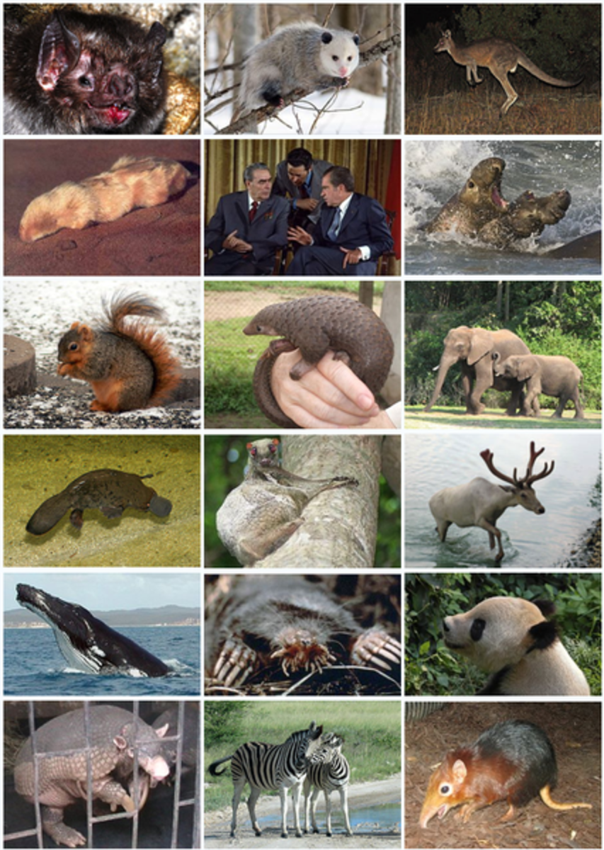These are the modern mammals, including us. All of them are descended from tiny animals that survived in a world of giants by evolving a very clever reproductive strategy.