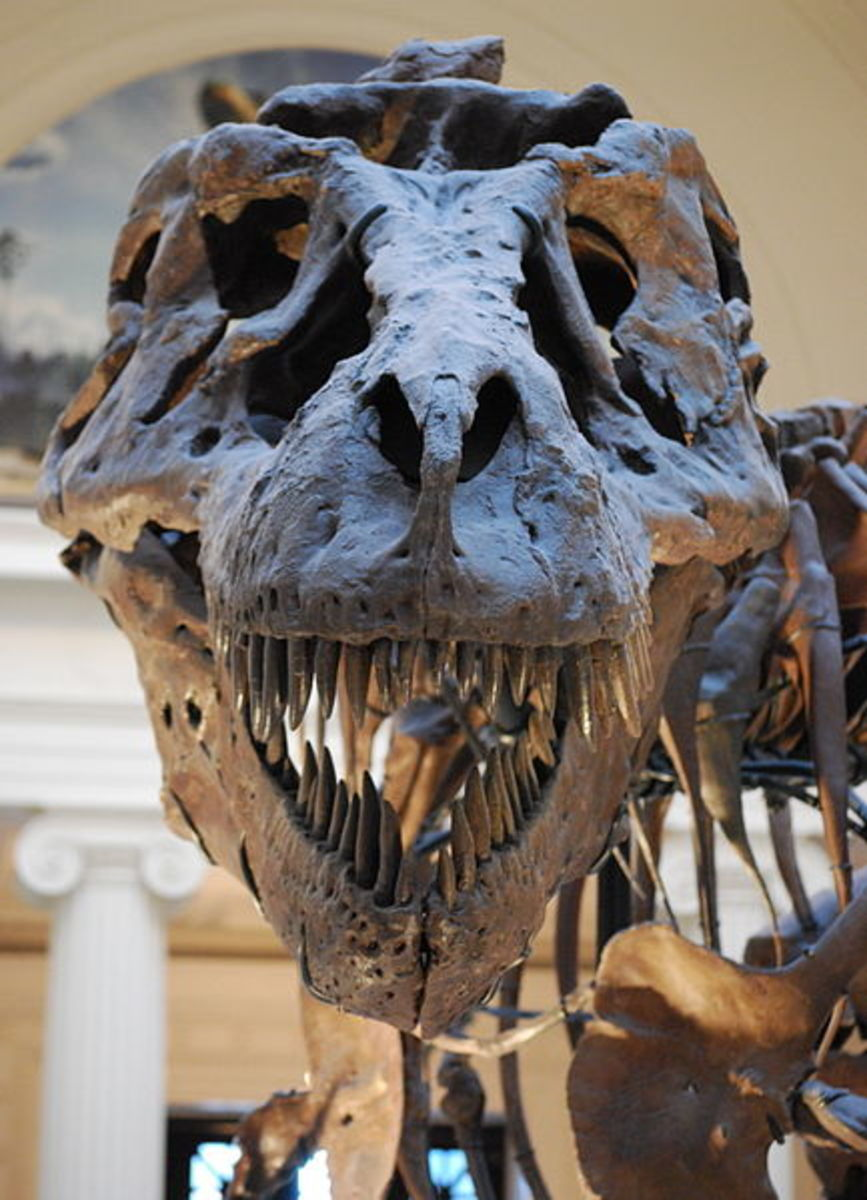 Dinosaurs: Tyrannosaurus Rex