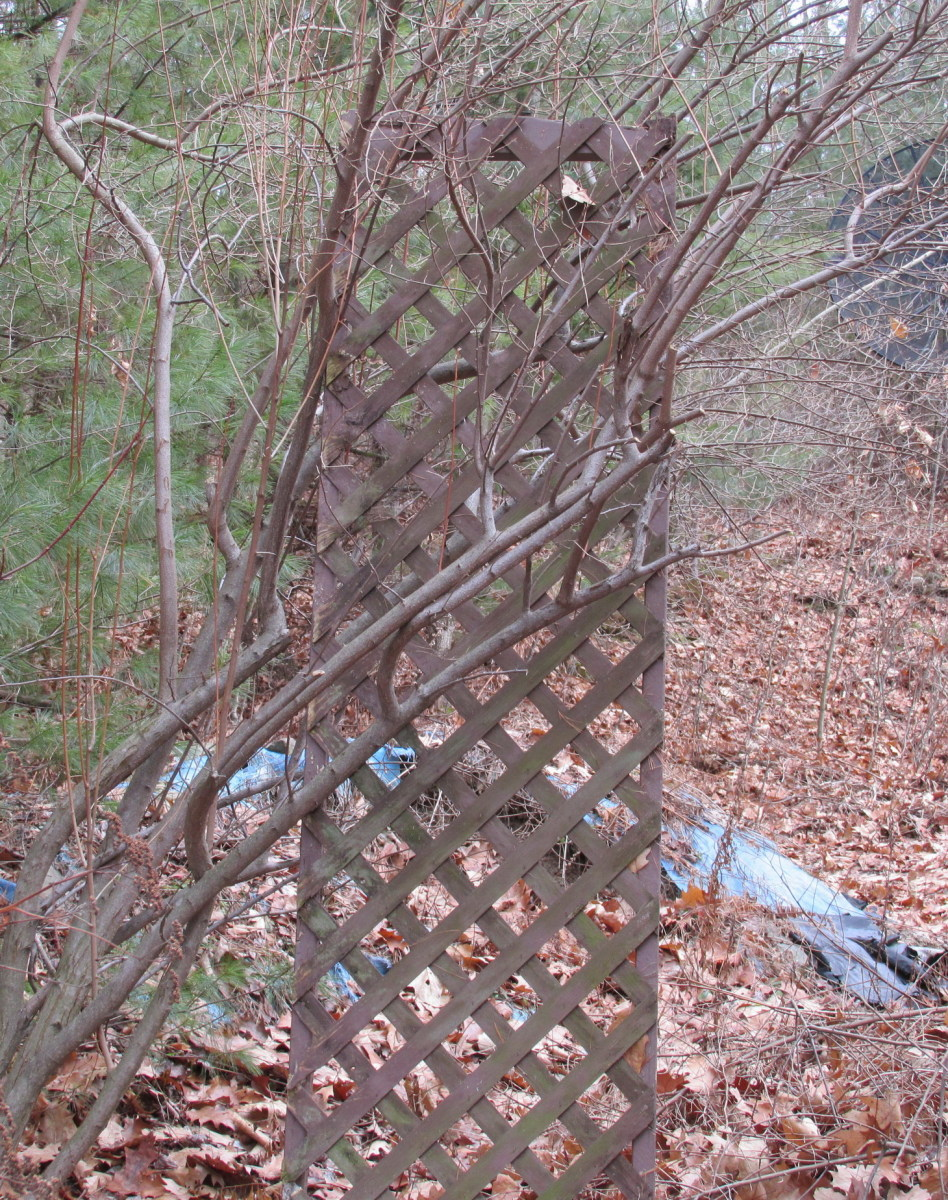 Trellis made of 2 x 4's and wooden lattice.