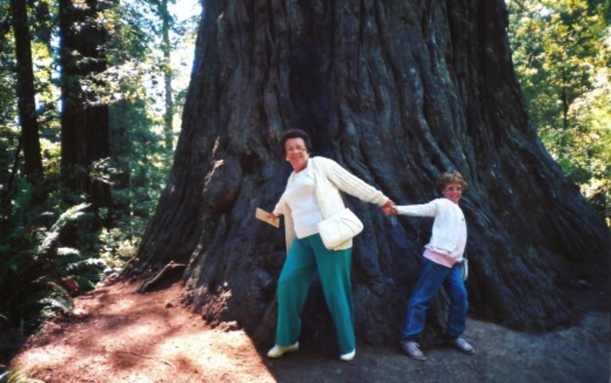 Look at the size of that Redwood Tree in the National Park!