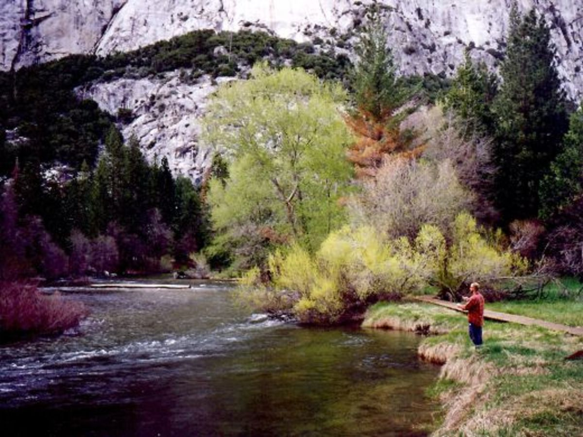 A fly fisherman in Yosemite National Park