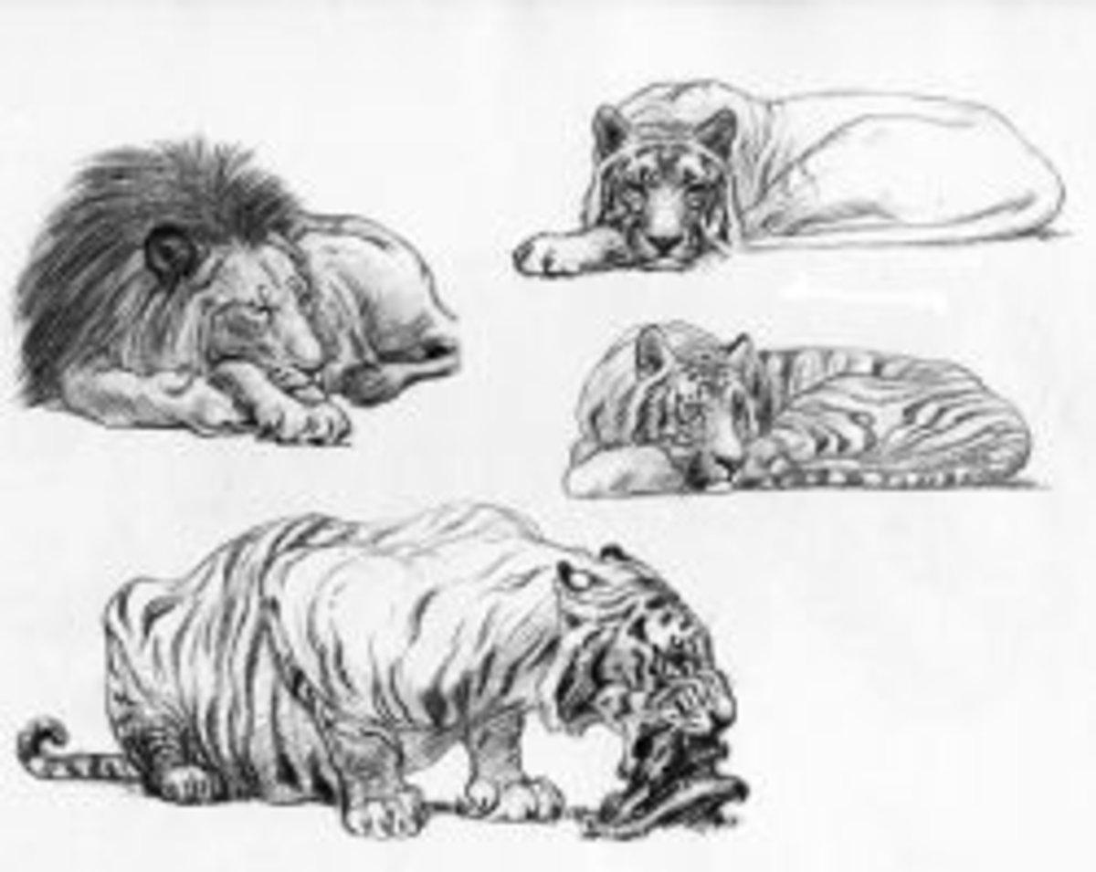 Big Cat sketches by Kent Hultgren