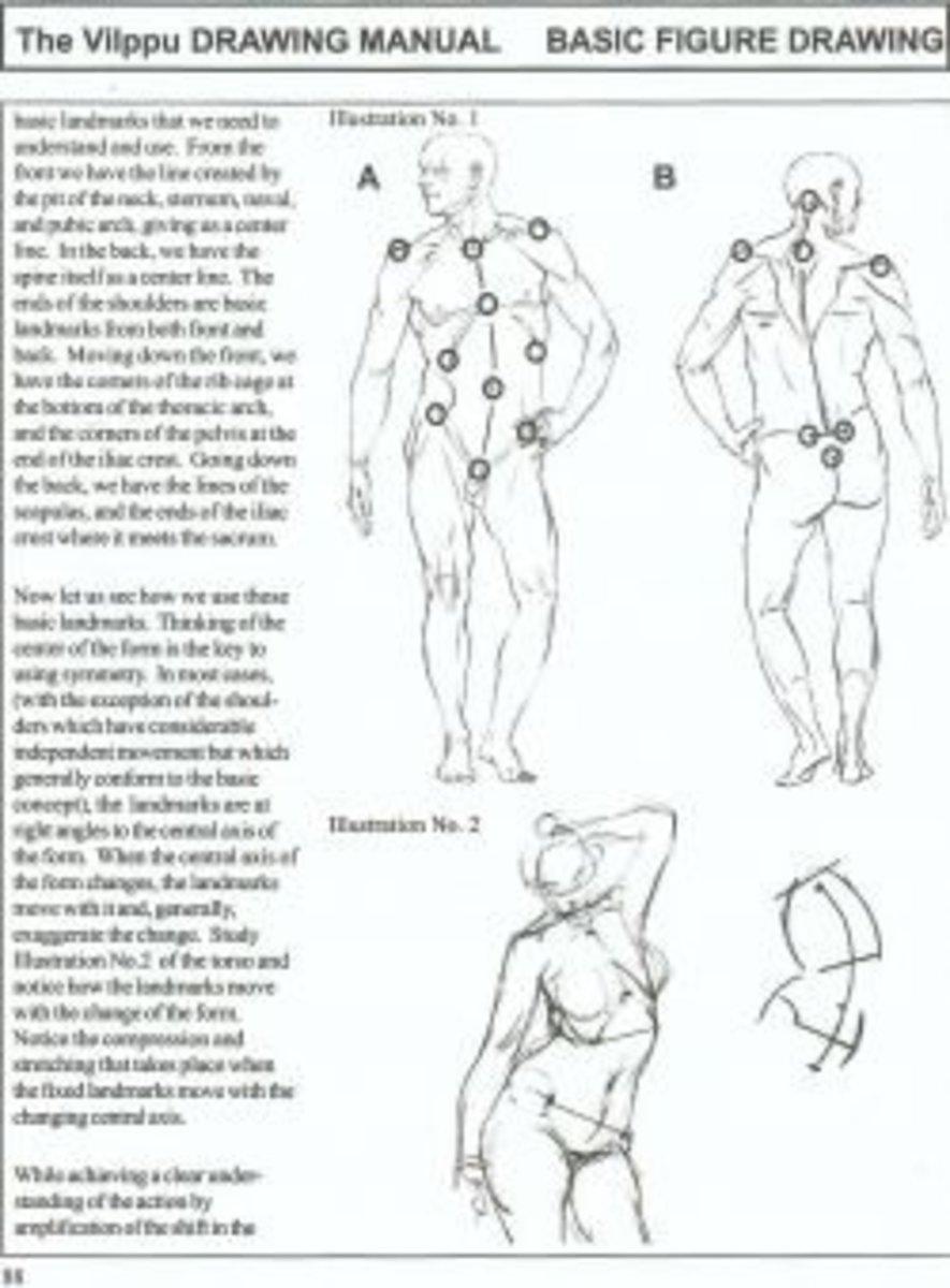 Vilppu drawing manual screenshot anatomy proportions landmarks