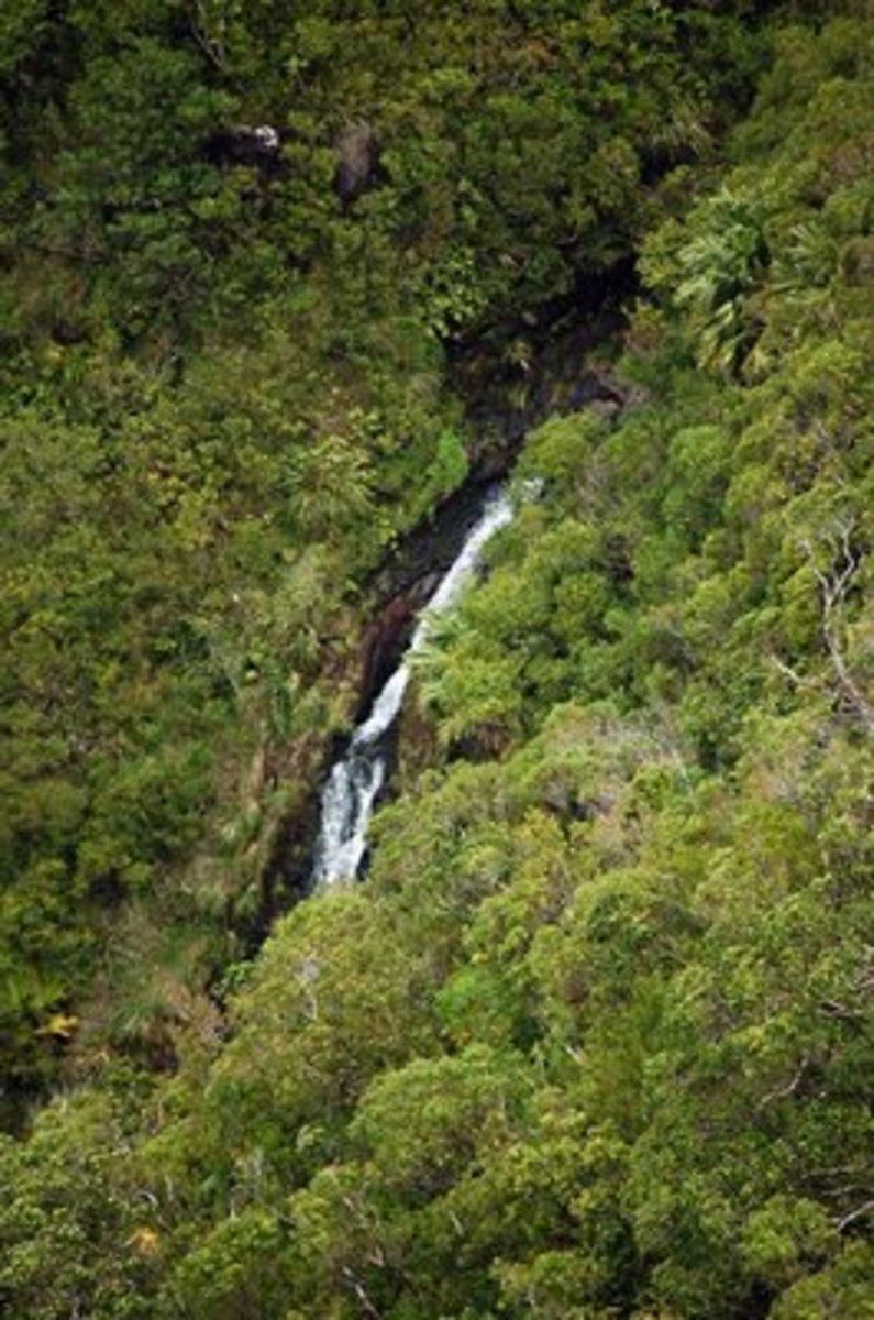 Pauoa stream area, Lulumahu waterfall