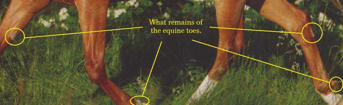 Remains of their toes.